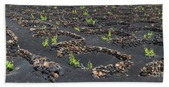 Lanzarote Vineyards Beach Sheet by Delphimages Photo Creations