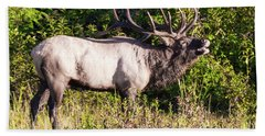 Beach Towel featuring the photograph Large Bull Elk Bugling by D K Wall