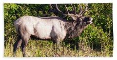 Large Bull Elk Bugling Beach Towel