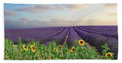 Lavender And Sunflower Flowers Field Beach Towel