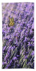 Lavender And Tiger Swallowtail In The Morning Light Beach Towel by Diane Schuster