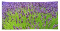 Beach Sheet featuring the photograph Lavender Gathering by Ken Stanback