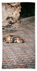 Beach Sheet featuring the photograph Lazy Cat    by Silvia Ganora