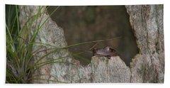 Lazy Tree Frog Beach Towel
