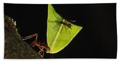 Leafcutter Ant Atta Sp Carrying Leaf Beach Towel by Cyril Ruoso