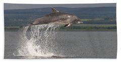 Leaping Bottlenose Dolphin  - Scotland #39 Beach Towel