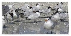 Least Terns Beach Sheet