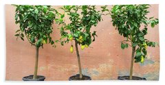 Lemon Trees With Ripe Fruits Beach Towel