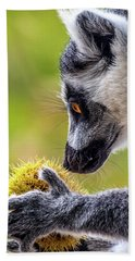 Lemur And Sweet Chestnut Beach Sheet