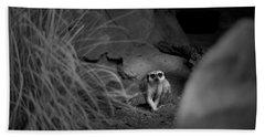 Lemur Beach Sheet