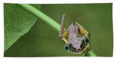 Beach Sheet featuring the photograph Lemur Tree Frog - 1 by Nikolyn McDonald