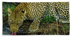 Leopard At A Pond Beach Towel