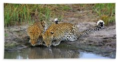 Leopards Beach Towel