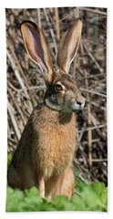 Lepus Californicus Beach Towel