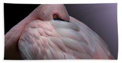 Lesser Flamingo Resting Beach Towel