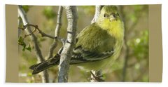 Lesser Goldfinch 1 Beach Towel