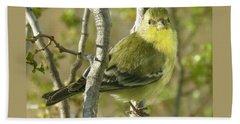 Lesser Goldfinch 1 Beach Sheet