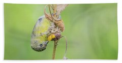 Lesser Goldfinch 4057-071117-1cr Beach Towel