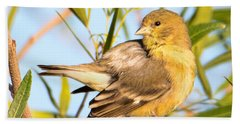 Beach Towel featuring the photograph Lesser Goldfinch by Dan McManus