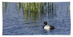 Lesser Scaup Adult Male Beach Towel