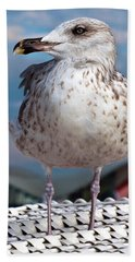 Liberty Of An Pacific Gull Beach Towel