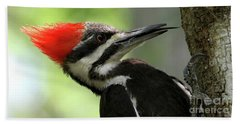 Lick It Up - Pileated Woodpecker Beach Towel