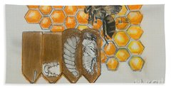 Life Cycle Of A Bee  Beach Towel by Francine Heykoop