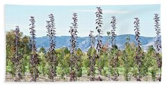 Life On A Tree Farm-foothills View #1 Beach Towel