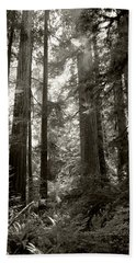 Light Through Redwoods Beach Towel