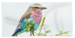 Lilac Breasted Roller. Beach Sheet