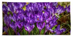 Lilac Crocus #g2 Beach Sheet by Leif Sohlman