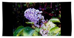 Lilacs Beach Sheet