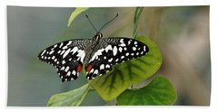 Beach Towel featuring the photograph Lime/chequered Swallowtail Butterfly by Paul Gulliver