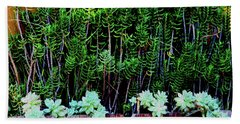 Line Of Succulents And Red Fence Beach Towel