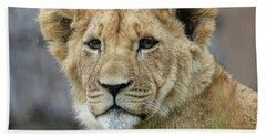Lion Cub Close Up Beach Sheet by Steve McKinzie