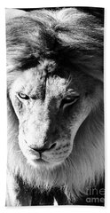 Lion Head Face Eyes Mane Front View Black And White Beach Towel