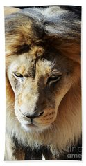 Lion Head Face Eyes Mane Front View Beach Towel