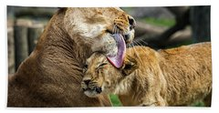 Lion Mother Licking Her Cub Beach Towel