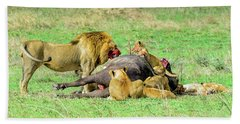 Lion Pride With Cape Buffalo Beach Towel