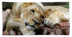 Lion Resting Beach Towel by Inspirational Photo Creations Audrey Woods