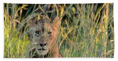 Lion Warily Watching Beach Towel