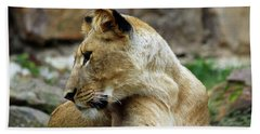 Lioness Beach Sheet by Inspirational Photo Creations Audrey Woods