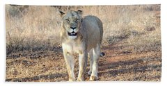 Lioness In Kruger Beach Sheet by Pravine Chester