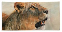 Lioness Portrait 2 Beach Towel by David Stribbling
