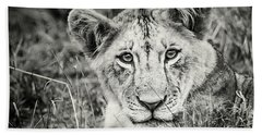 Lioness Portrait Beach Towel