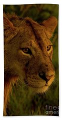 Lioness-signed-#6947 Beach Towel