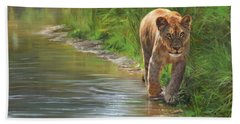 Lioness. Water's Edge Beach Sheet by David Stribbling