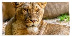 Lioness Beach Sheet