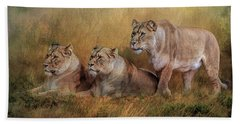 Lionesses Watching The Herd Beach Sheet by Brian Tarr