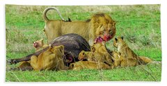 Lions With Cape Buffalo Kill Beach Sheet